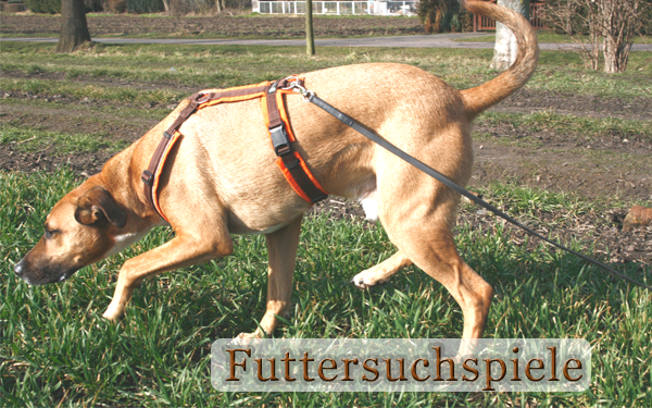 http://roccos-coaching.de/wp-content/uploads/2015/10/Futtersuchspiele.png
