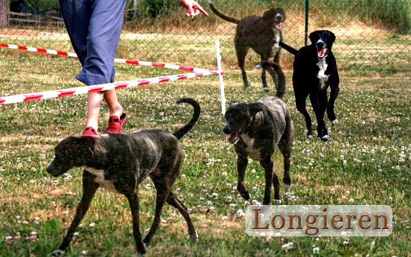 http://roccos-coaching.de/wp-content/uploads/2015/10/Longieren.png